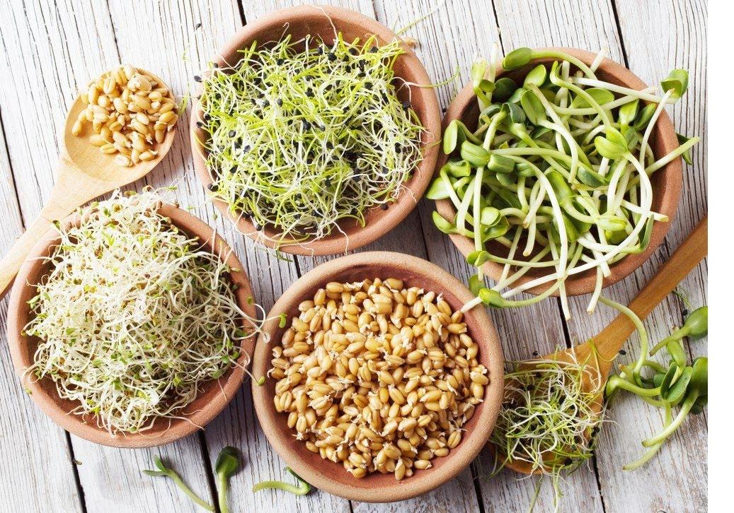 Традиционное проращивание зерна