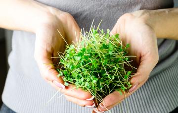 Проращиватели – свежий комплекс микроэлементов в ежедневном рационе
