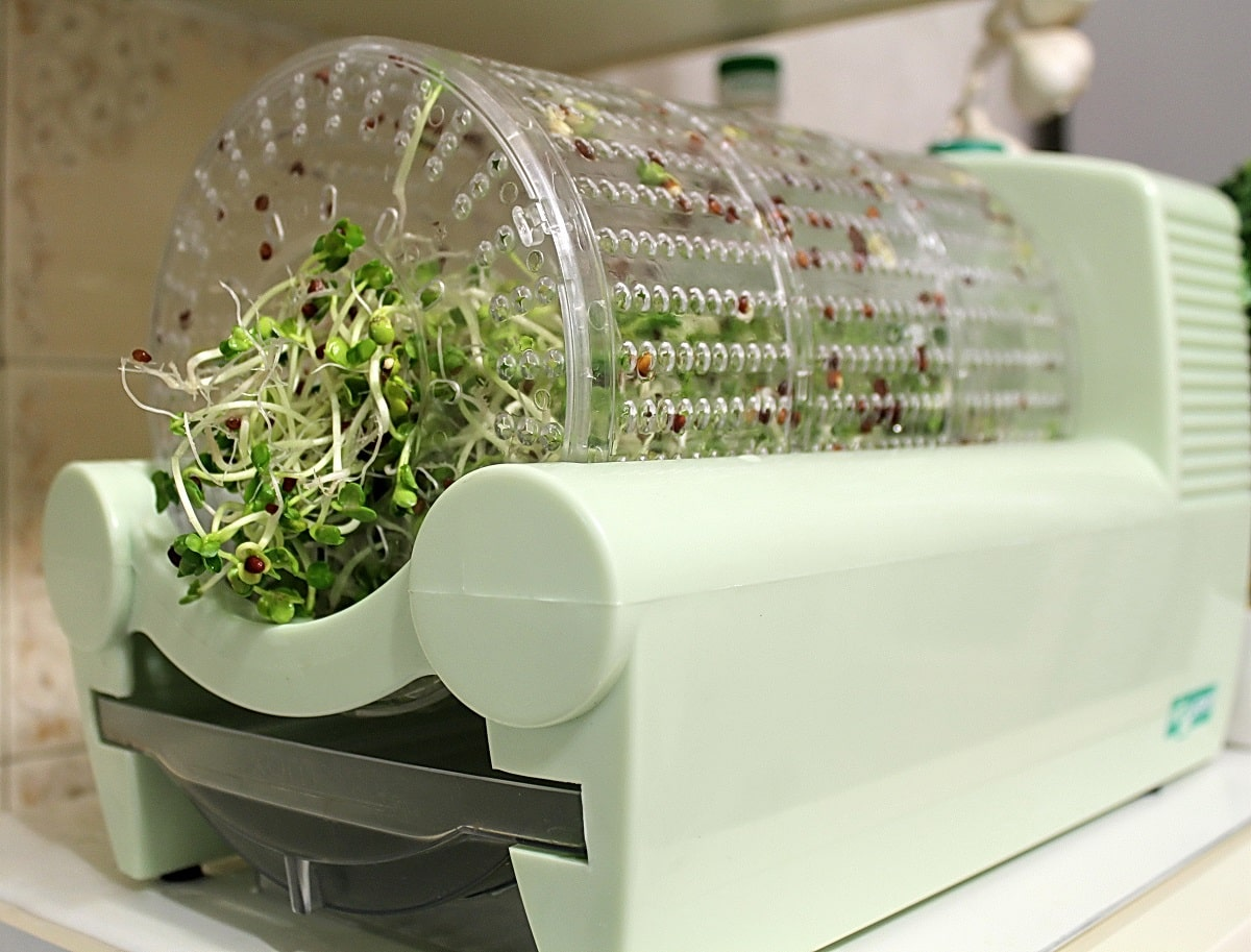 Проращиватель семян конопли как марихуана разрушает мозг