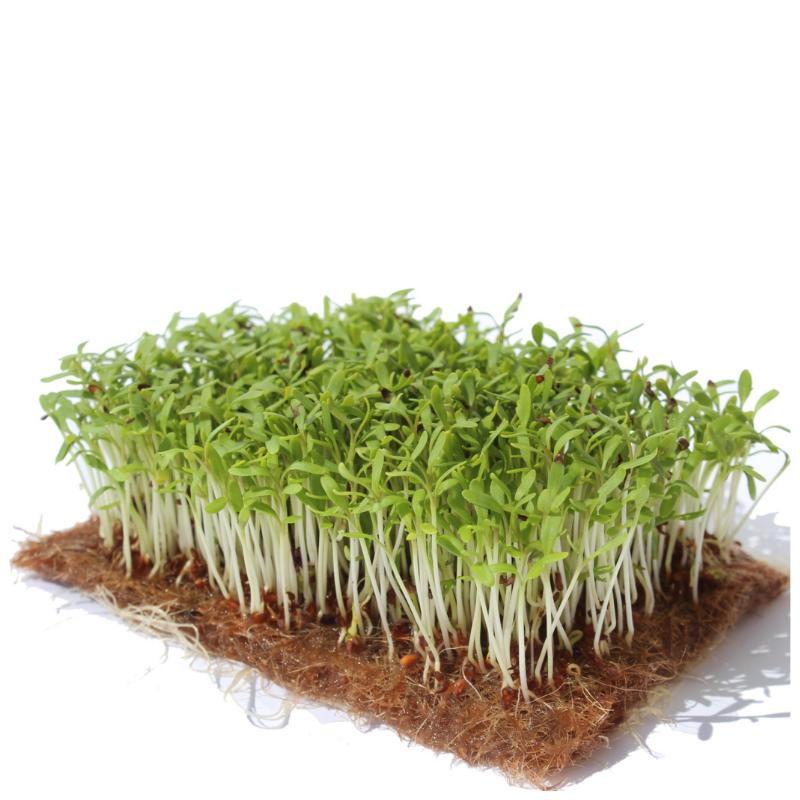 Семена для выращивания микрозелени Семко Кресс-салат Данский 100 г