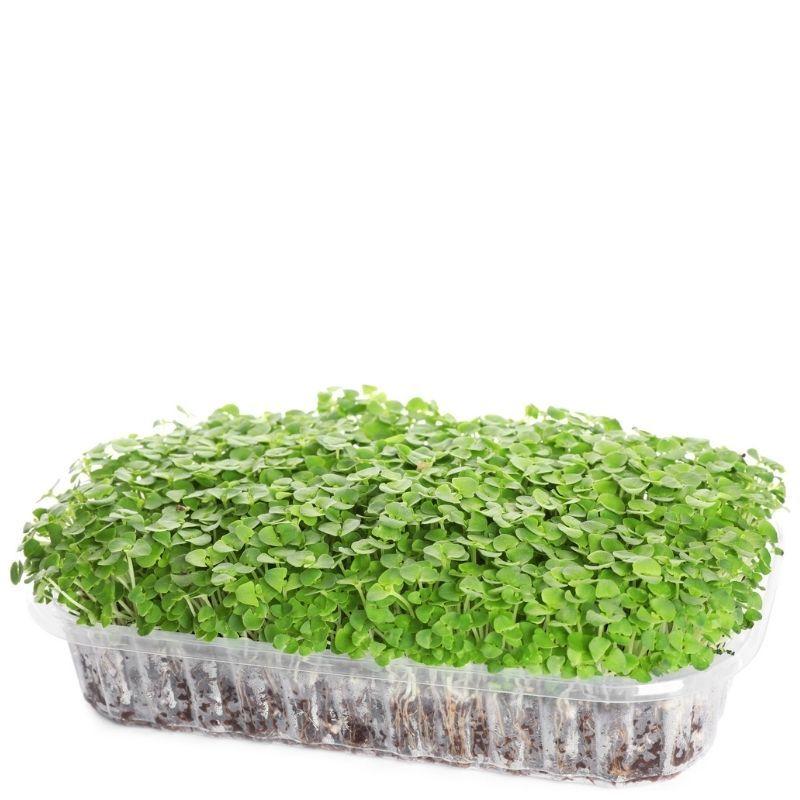 Набор для выращивания микрозелени Семко
