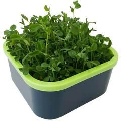 Проращиватель Здоровья Клад Моя микрозелень графит