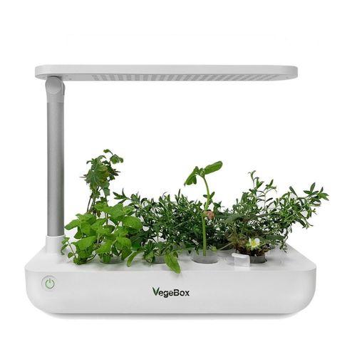 Проращиватель VegeBox T-Box (настольная садовая ферма)