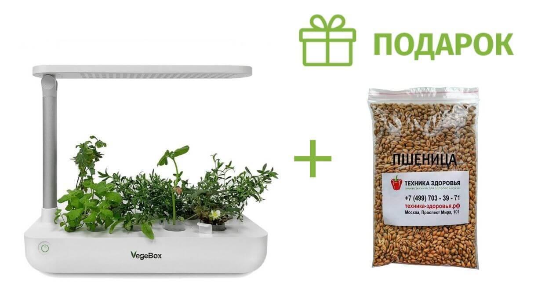Подарок к настольной садовой ферме VegeBox T-Box